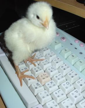 peck typing